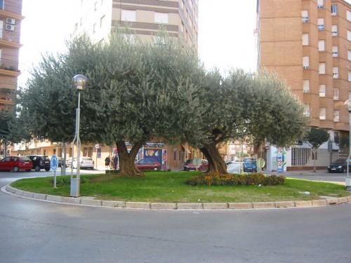 rotonda_olivera